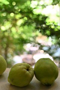 פרי צנוע שיש בו יותר מהנראה לעין. צילום: אהובה שורצברד